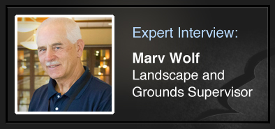 Expert Interview Marv Wolf