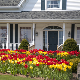 house with tulips