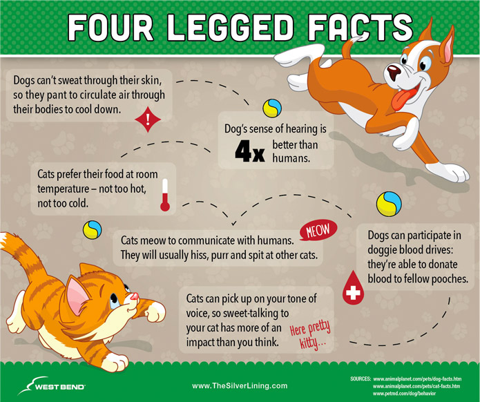 Did You Know Pet Fun Facts