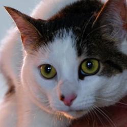 WB Cares Mia Cat