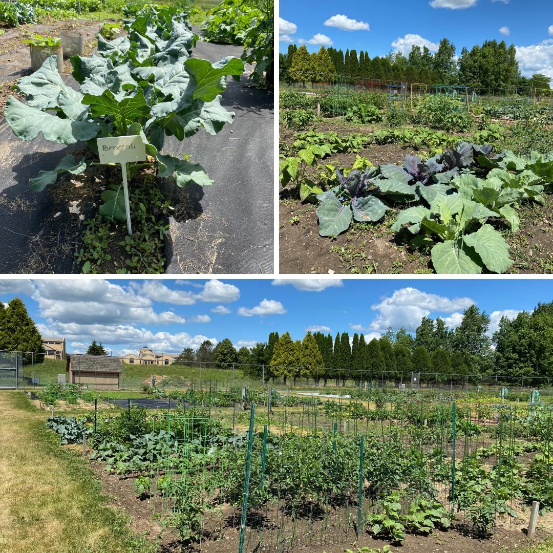 Associate Gardens