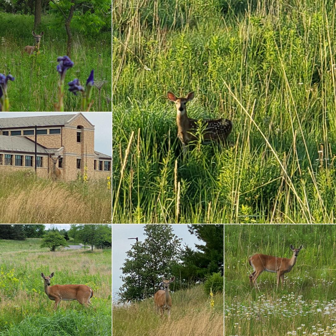 Deer (1)