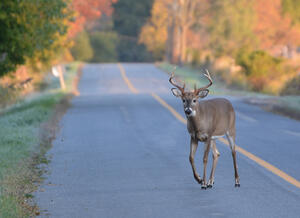Motorcycle safety tips for avoiding a deer