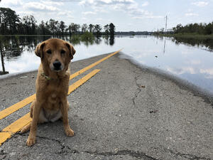 Safe pets during a natural disaster