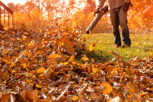 Tips for getting rid of leaves