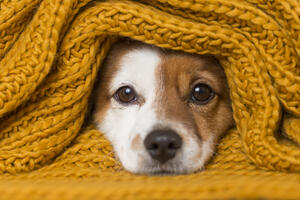 Tips for keeping your home clean with pets
