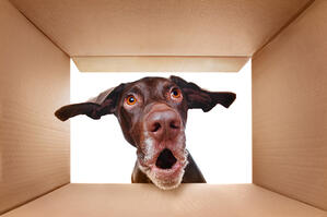 Tips for moving pets into a new home