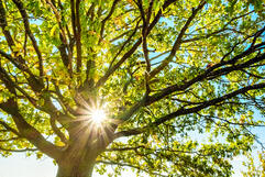 Tree safety tips