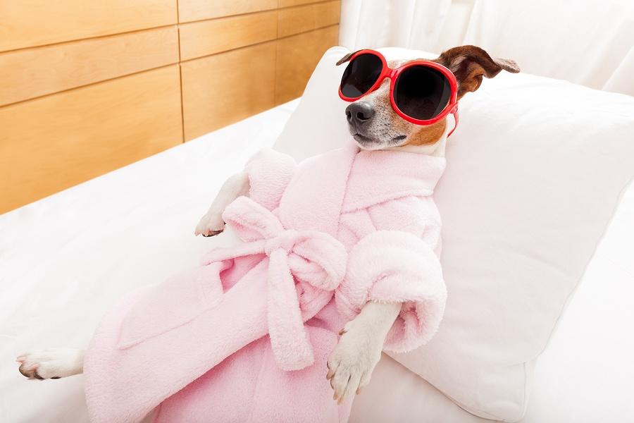 bigstock-Dog-Spa-Wellness-94814390.jpg