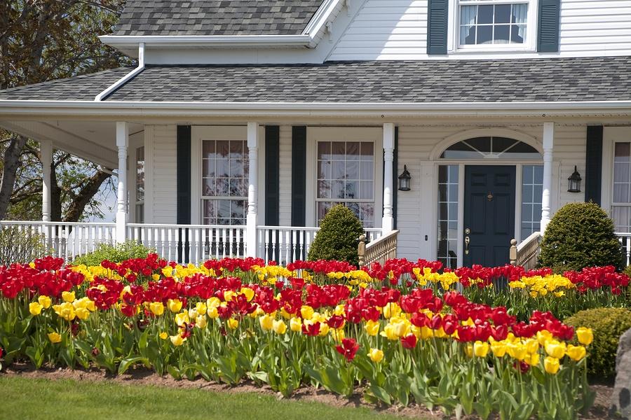 bigstock-Tulip-House-10002074.jpg
