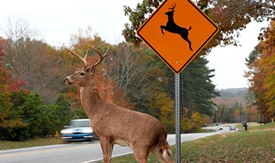 DeerRoadSign.jpg