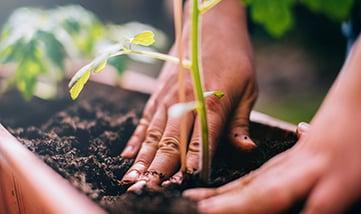gardening-safety