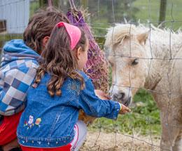 kids-at-petting-zoo.jpg