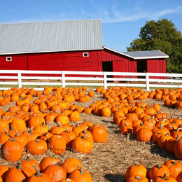 pumpkin-farm.jpg