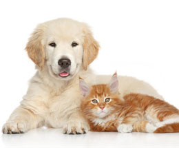 puppy-and-kitten.jpg