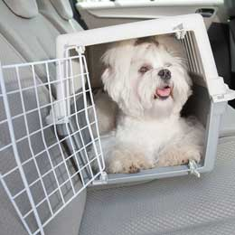 small-dog-in-crate.jpg