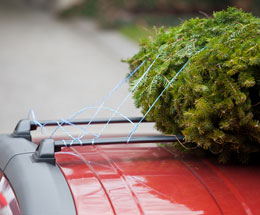 xmas-tree-on-car.jpg